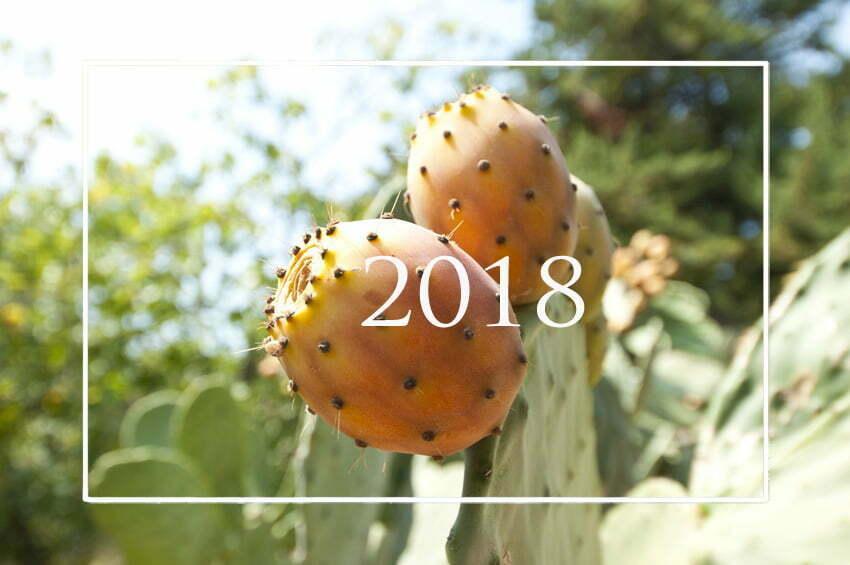 czego szukaliście na blogu w 2018 roku