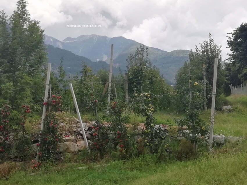 Valtellina, czyli lombardzka kraina doskonałego czerwonego wina